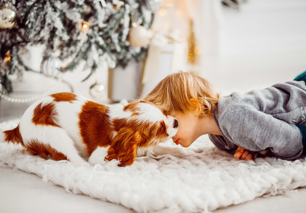 Best Dogs for Kids and Families to Adopt