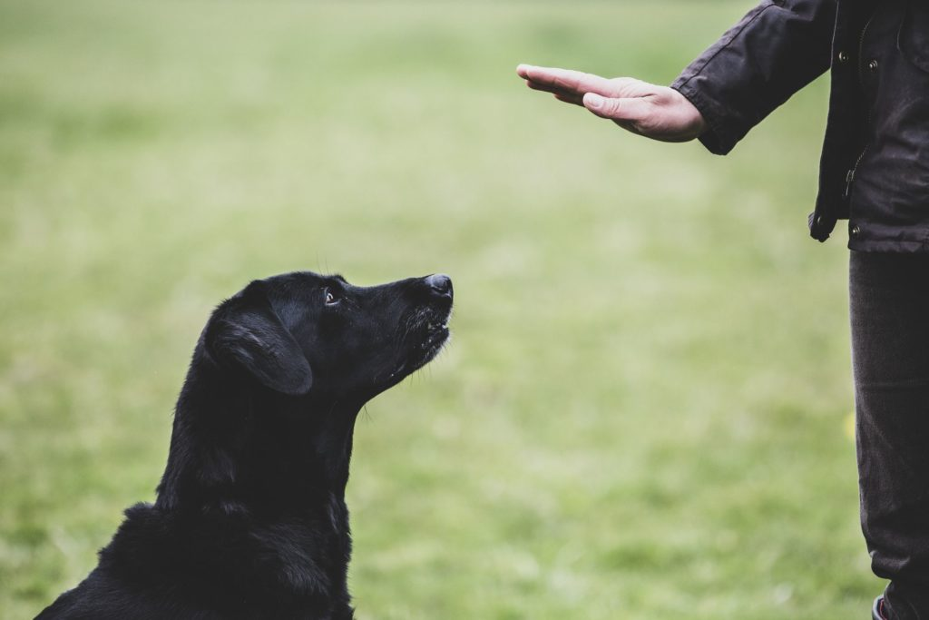 Why You should Train Your Dog?