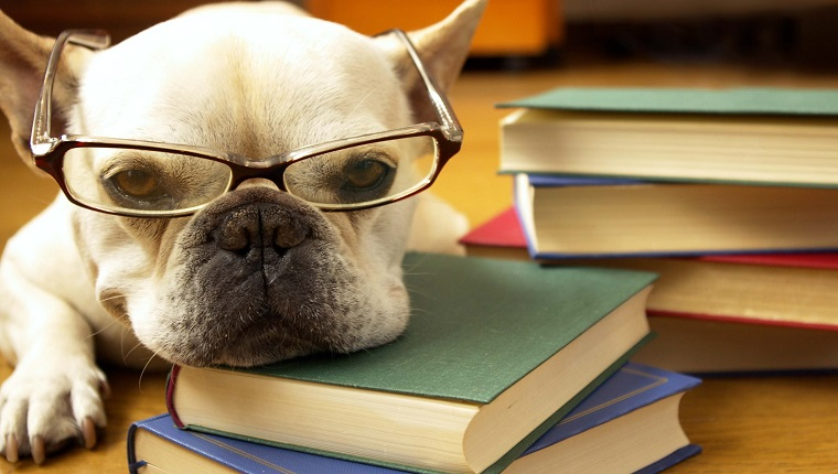 Dog Training Books for Your Reference