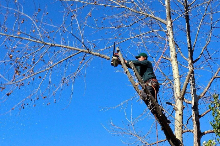 Top Qualities of a Tree Services Company