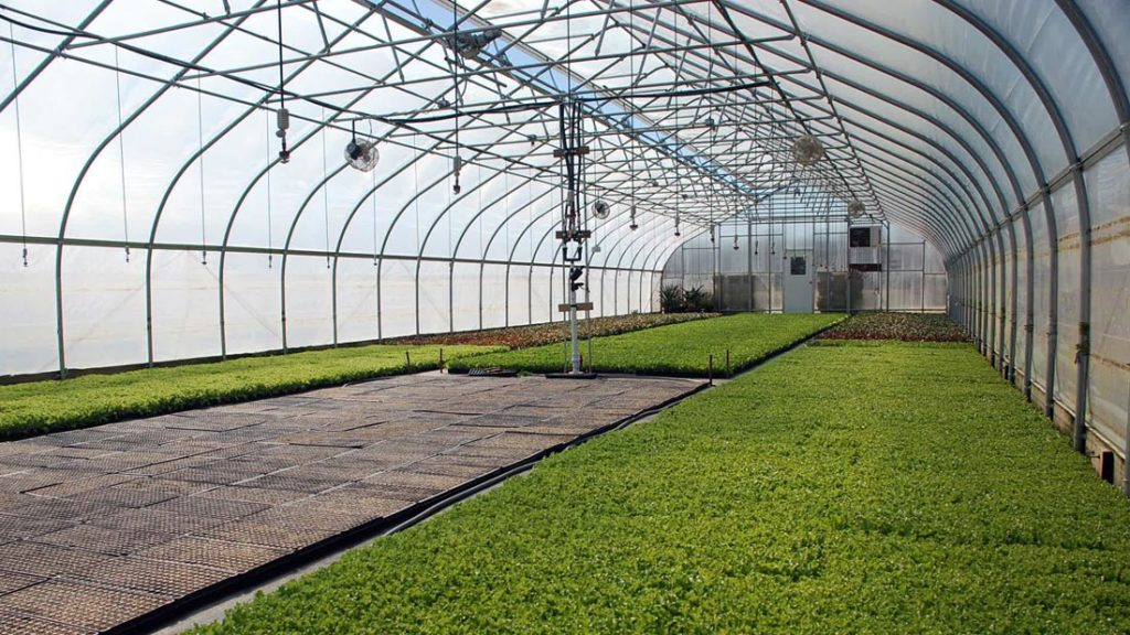 Things to Consider When Building Your Own Greenhouse